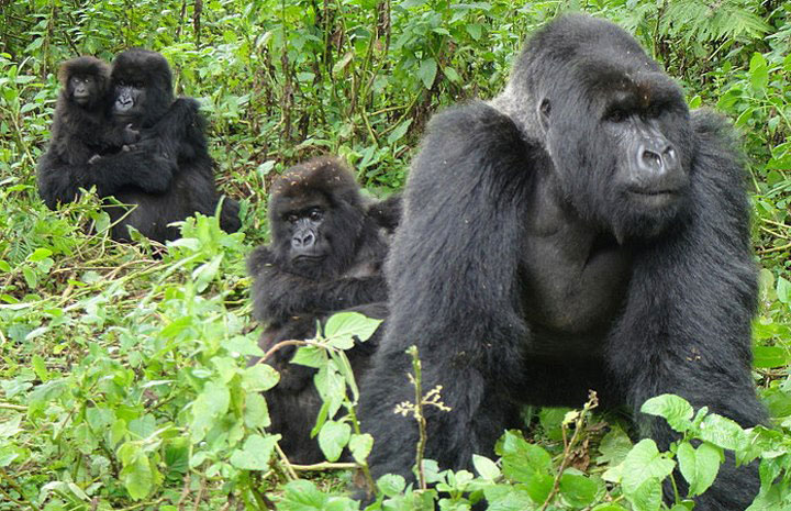 Gorilla tracking by flight from Entebbe to Bwindi, flying form Entebbe to Bwindi, cheap Bwindi flights