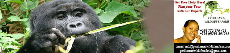 Flying to Bwindi Mountain Gorilla Uganda Tour