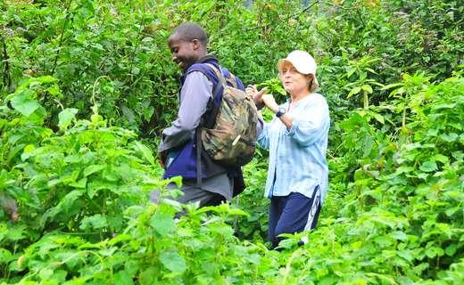 Gorilla tracking, Bwindi - Uganda gorilla trek tour
