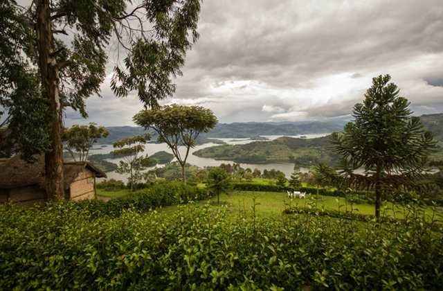 View from Arcadia Cottages Lake Bunyonyi gorillas and wildlife safaris
