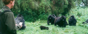 gorilla habituation experience tour uganda - Gorillas and Wildlife Safaris
