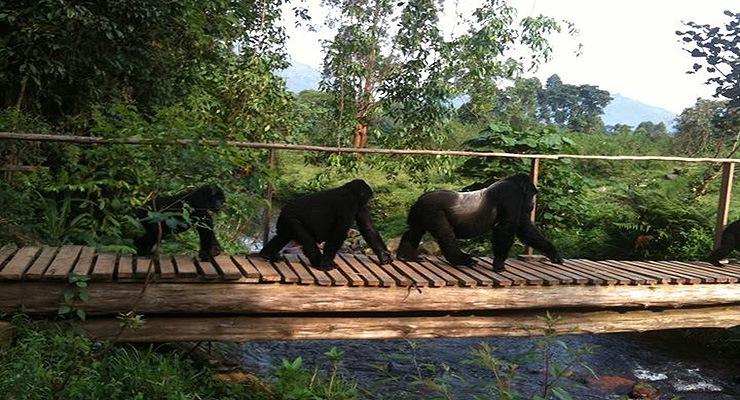 uganda safari lodges safari holiday uganda
