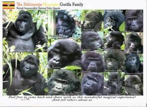 Habinyanja Gorilla Family Members Bwindi