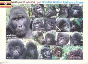 gorilla tracking Members of Rushegura Gorilla Family, Buhoma gorilla trek gorilla group gorilla uganda