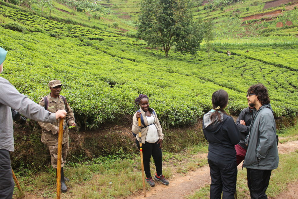 Uganda Gorilla Tracking &Lake Bunyonyi Canoe Trek - 4 Days Gorillas and Wildlife Safaris
