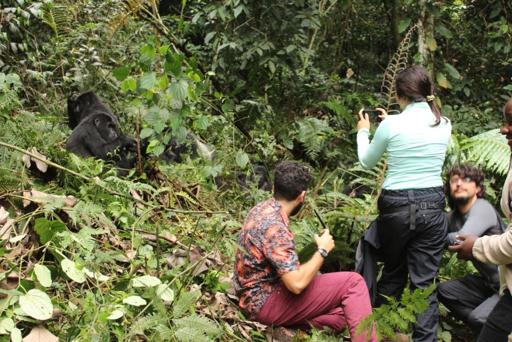 Tips for Gorilla Trekking - how to have the best gorilla trek in Rwanda Gorillas and Wildlife Safaris