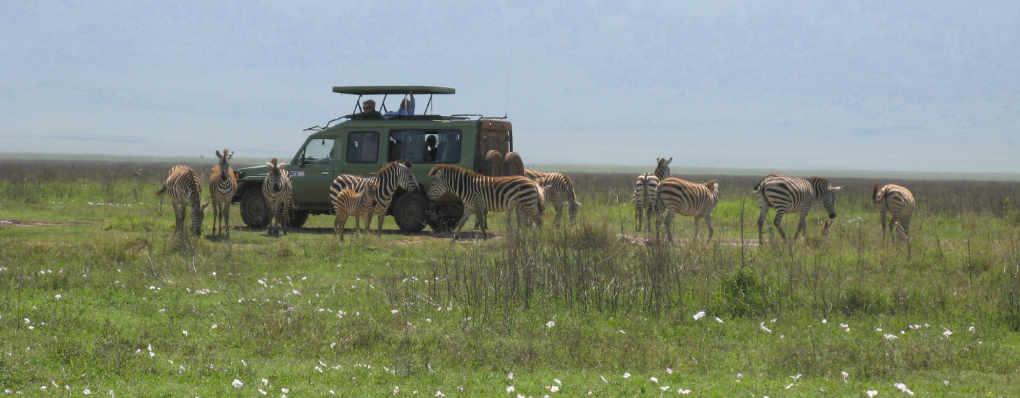 Uganda Tanzania Safari: Serengeti -Ngorongoro -Gorilla Trekking, Chimps, Zanzibar - 14 Days