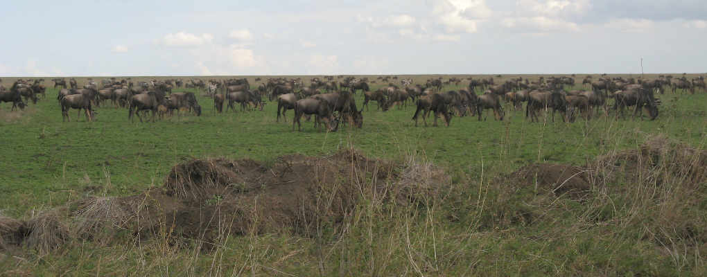 Tanzania Wildebeest migration safari 9 days