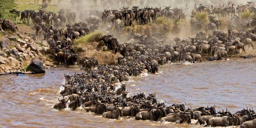 6 days Masai Mara great Wildebeest migration safari.