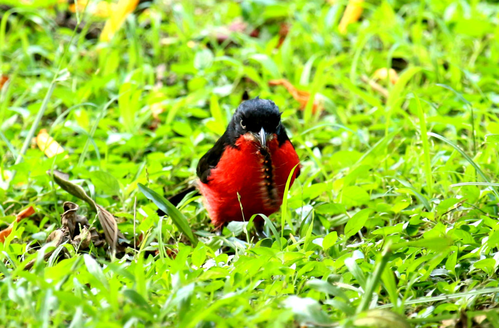 Top trending Uganda birding tours birdwatching destinations gorillas and wildlife safaris
