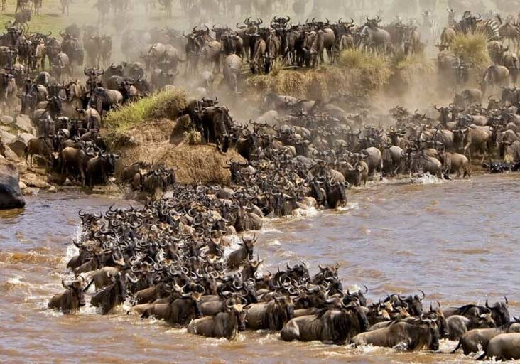 6 days Masai Mara great Wildebeest migration safari.